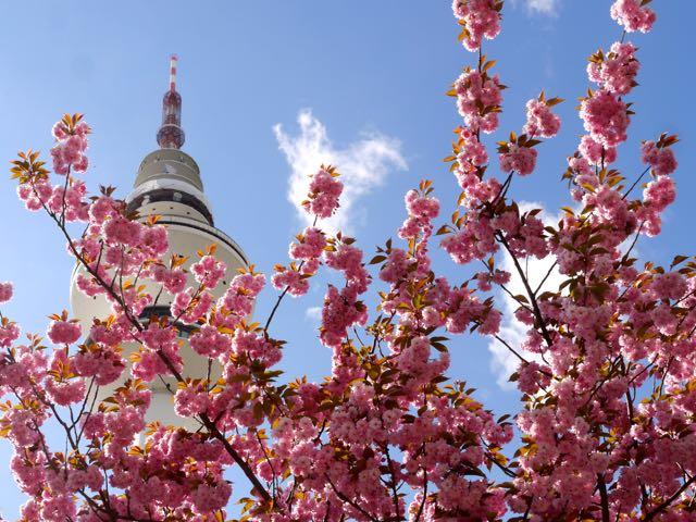 Frühlingsspecial Hamburg