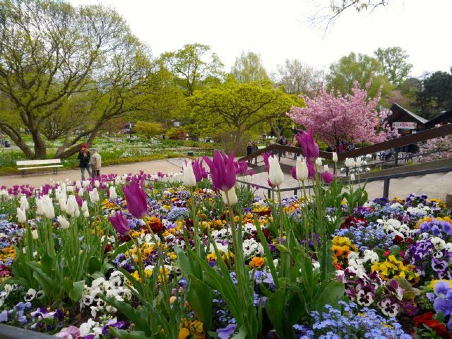 Blumen im Planten un Blomen Hamburg