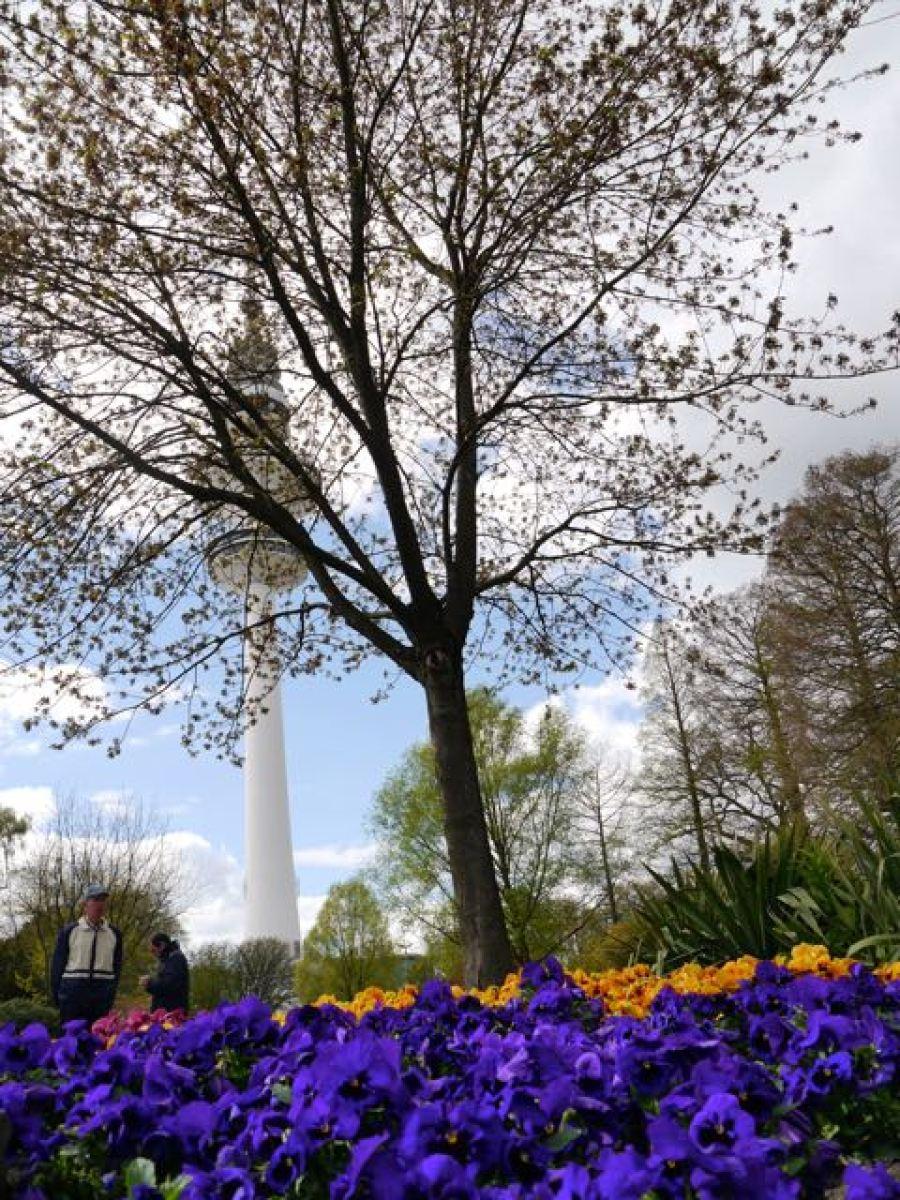 Blumen und Fernsehturm Hamburg