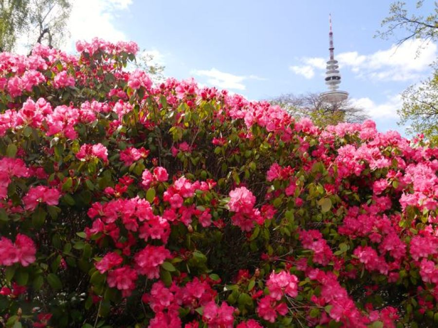 Fernsehturm Hamburg Planten un Blomen