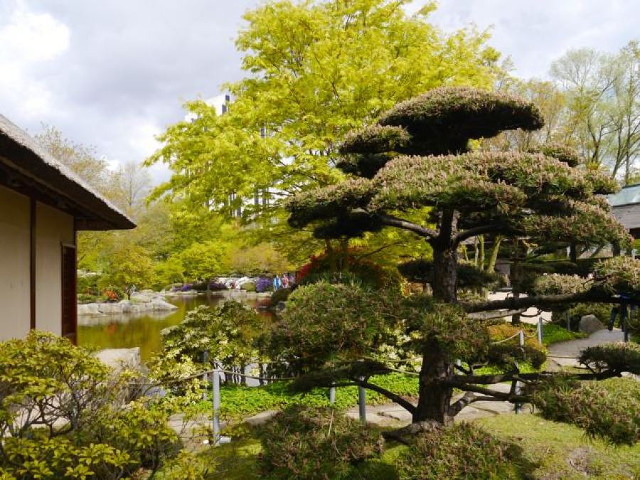 Japanischer Garten im Planten un Blomen